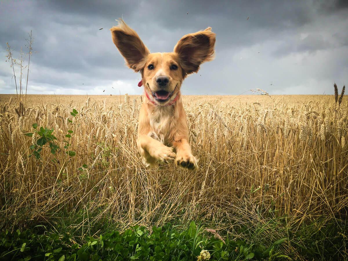 A dog jumping around.