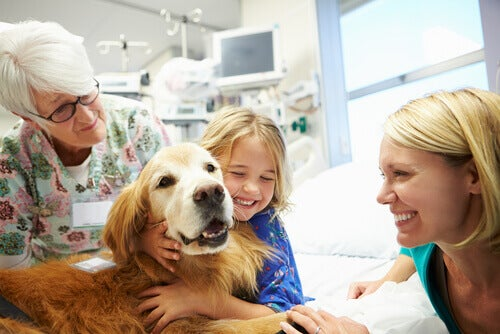 Dog giving emotional assistance in a hospital.