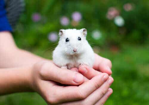 Bringing a Hamster Home
