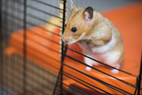 How to improve your hamster's cage?