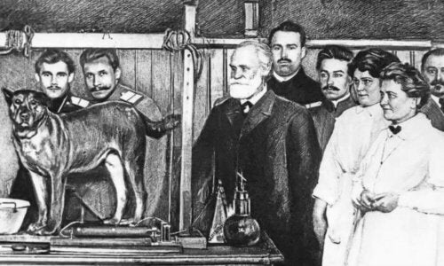 Ivan Pavlov and Positive Reinforcement in Dogs