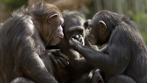 Can Monkeys Talk?