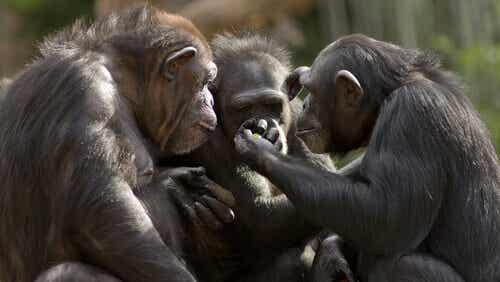 Can Monkeys Talk?