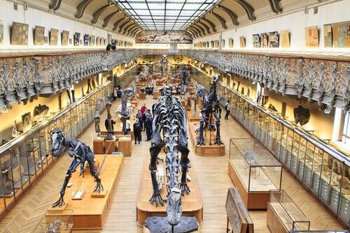 National Museum of Natural History in Paris.