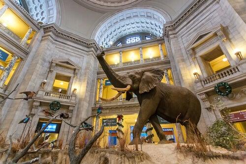 Smithsonian National Museum.