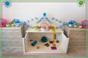 Hamster: homemade toys.