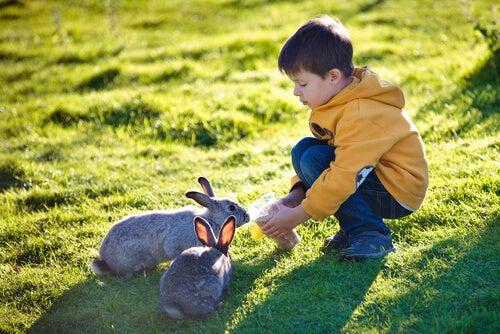 Boy feeding rabbits.