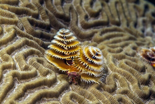 Two Christmas tree worms.