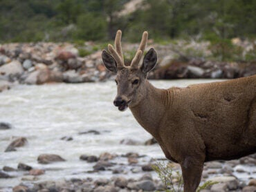 Discover Five Animals of the Patagonia Region