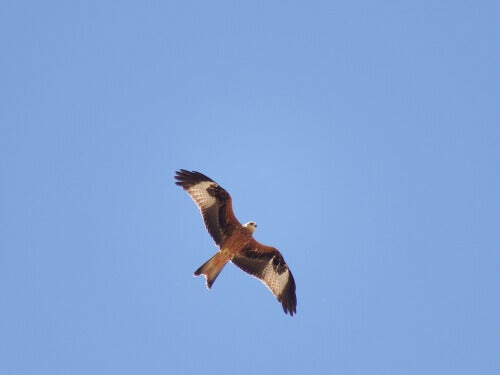 A red kite soaring through a clear blue sky.