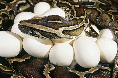 Some Snakes Are Good Mothers