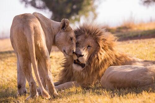 The Use of Pheromones in the Animal Kingdom