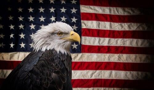 The American bald eagle.