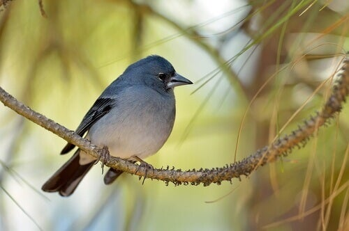 What Animals Live on the Canary Islands?