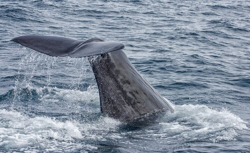 5 Species of Whale, the Giants of the Ocean