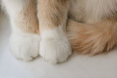 A cat's paws.