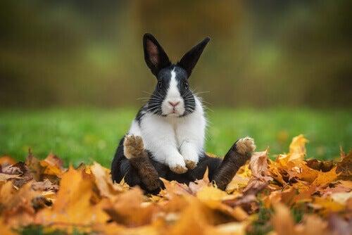 A rabbit playing outside.