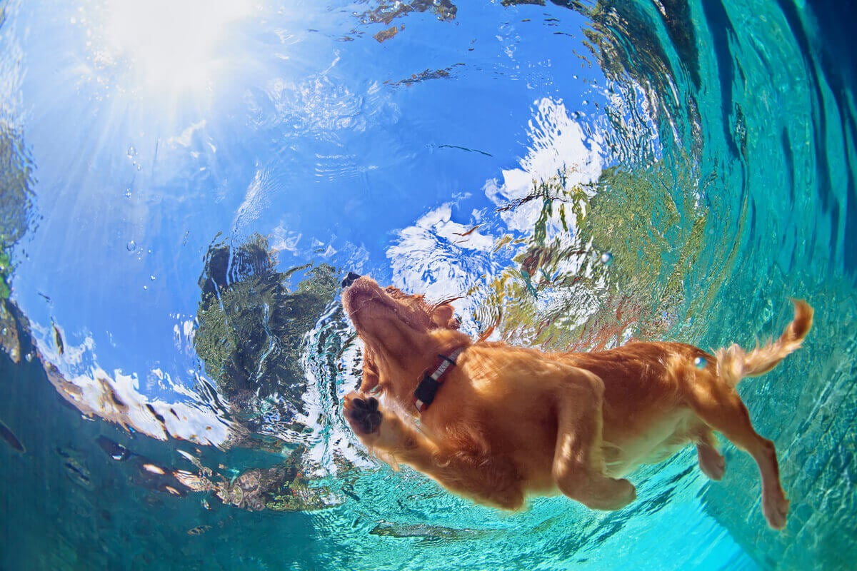 A dog swimming in a pool.