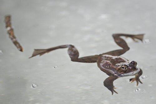 Frog in the ice.