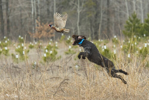 The Different Hunting Dog Breeds and Their Qualities