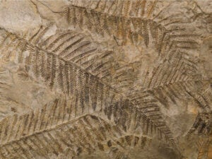 Leaves' imprints on a rock.
