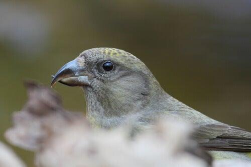 A long-billed bird.
