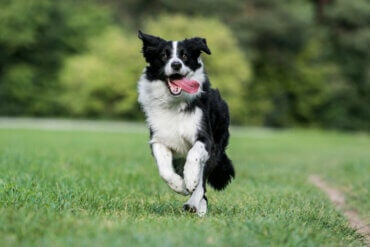What's the Most Anxious Dog Breed?