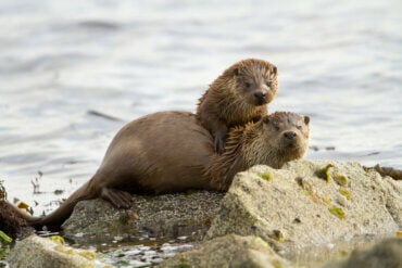 All About Affectionate Behavior in Otters