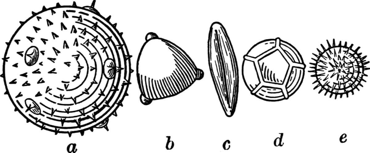 Palynology is essential for paleoecology.
