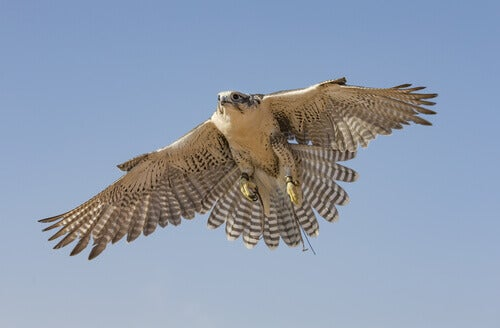 The incredible speed of the birds of prey.