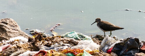 A seabird on a rubbish pile.