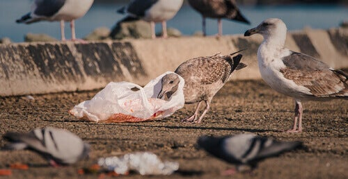 The Effects of Climate Change and Plastic Pollution on Seabirds