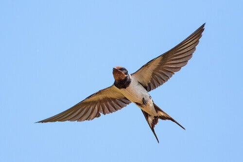 Swallow migrating to protect itself from the cold.