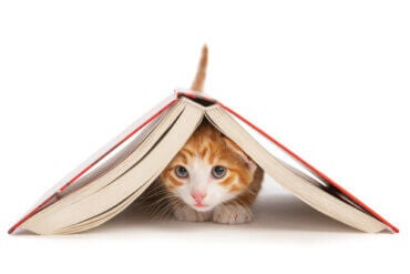 Feline Education: Is it Really Possible to Train a Cat?