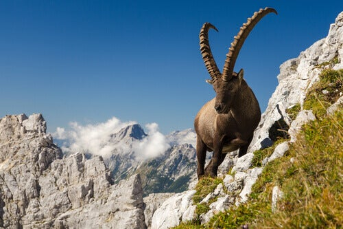 Gran Paradiso is the second best national park in Europe.