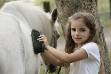 Your Horse's Coat: How To Properly Brush and Take Care of It