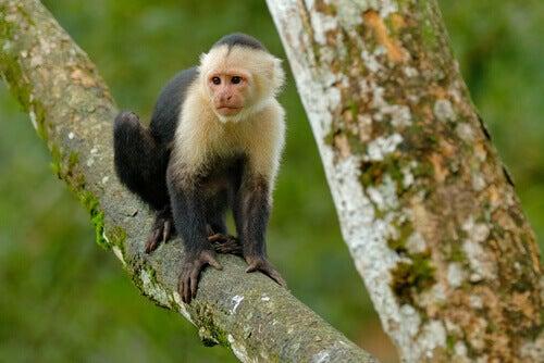 A monkey on a tree.