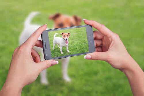 Tips on How to Make a Video of Your Favorite Pets