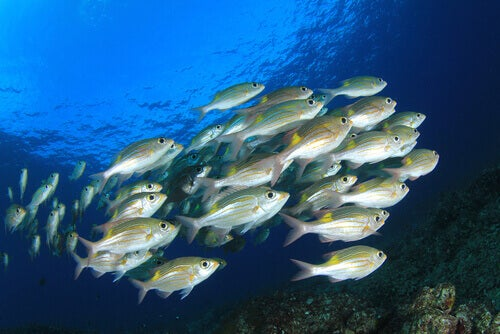 A school of fish.