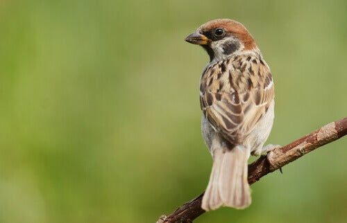 A sparrow on a branch.