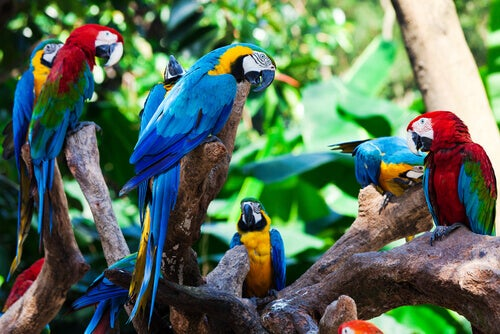 Colorful parrots perched on branches.