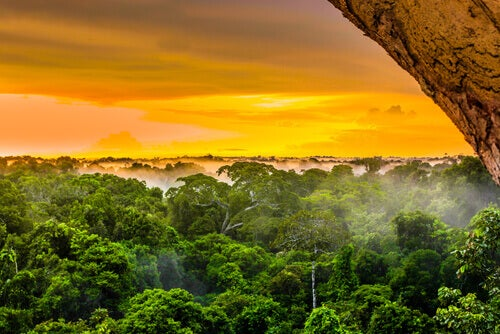 The Biodiversity of the Amazon, The Most Alive River on Earth