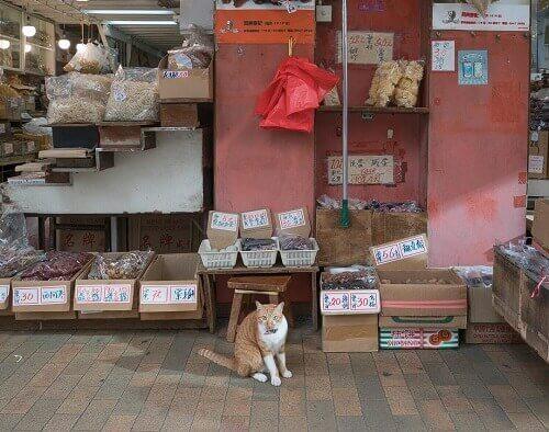 Cat in the market