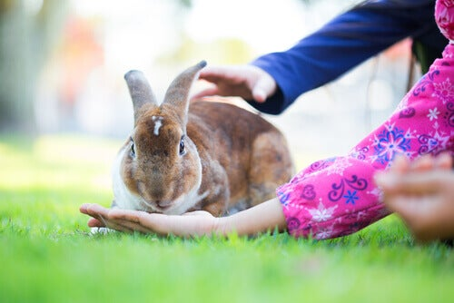 Children feeding a rabbit.