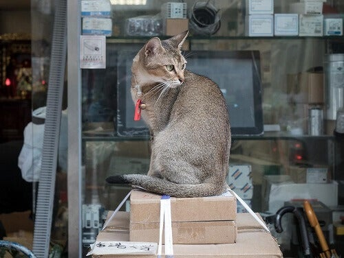 Hong Kong: The City in Love with Cats