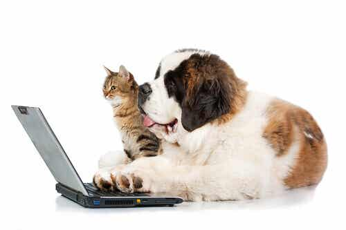 Excessive Humanization and Social Networks: Risks for Your Pet