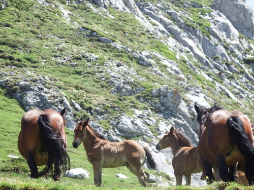 Horses grazing on the side of a moutain.
