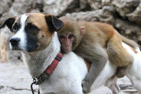 Monkey with dog.