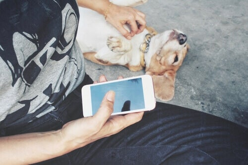 A pet owner scratching his dog's belly while holding a smart phone in his other hand.