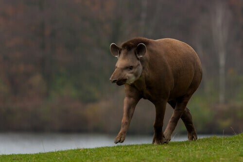 Discover These Five Hoofed Animals